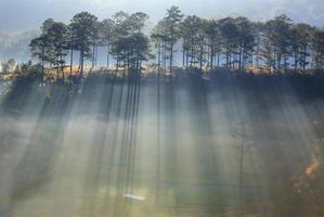 solen skiner genom skogen gör vacker solstråle vid gryningen