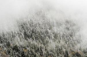hög bergskog, täckt av snöig hesfrost. huanglong, ch