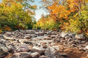 foreat stream på hösten foto