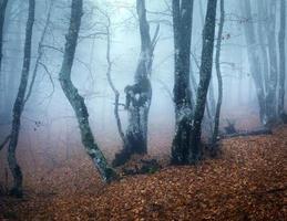 spår genom en mystisk mörk gammal skog i dimma. höst