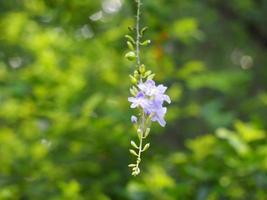 skogblomma i lila färg med mjuk och suddig bokeh foto