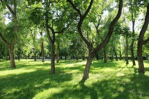 vacker park med många gröna träd foto
