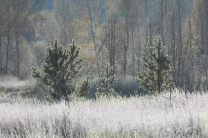 frost på träden och gräset, faller i alla färger
