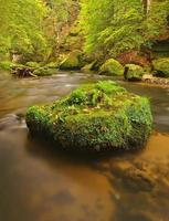 bergflod med stora mossiga stenblock i ström. foto