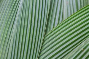 gröna palmblad foto