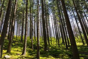 sikt på träd i skog i solig dag på sommaren foto