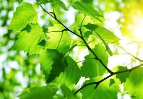 gröna löv foto