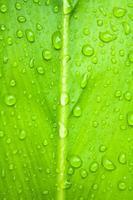 blad och droppar foto