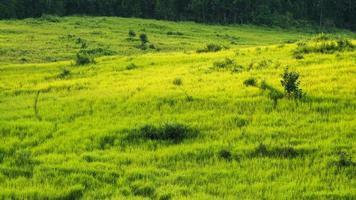 grön äng, Khao Yai National Park Thailand