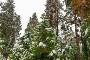 träd i vinterparken foto