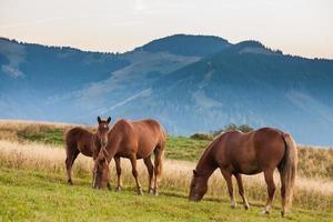 bergslandskap med betande hästar