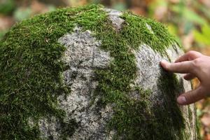 närbild av mossa på en stor sten foto