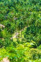 kokosnöt trädgård med resort på railay beach foto
