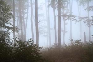 silhuetter under en dimmig höstdag