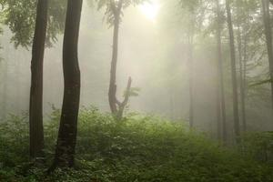 mörka träd och ljus genom dimman