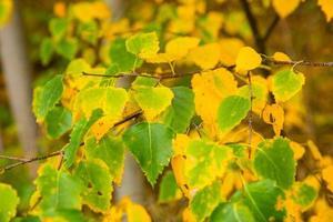höstens höstlöv foto