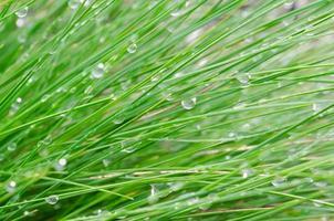 grönt gräs med vattendroppar