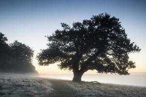 fantastiskt dimmigt höstfall soluppgånglandskap över täckt frost