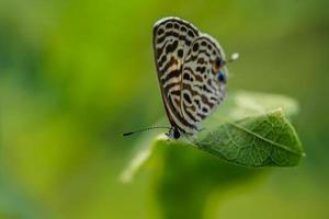 fjäril på grönt blad foto