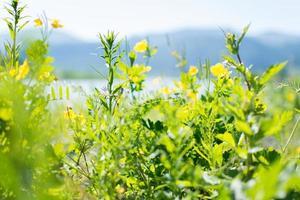 blommig bakgrund med vildblommor foto