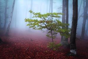 olika träd i blå dimma under hösten