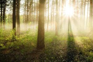 solnedgång i skogen foto