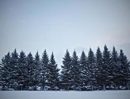 vinterträd i snön.