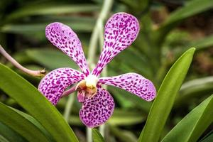 tropisk trädgård foto