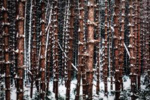 trädinriktning på kall vinterdag foto