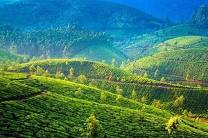 teplantager i Indien foto