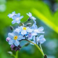 blå blomma med gul mitt