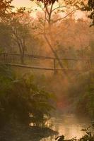 soluppgång på träbro mitt i djungeln