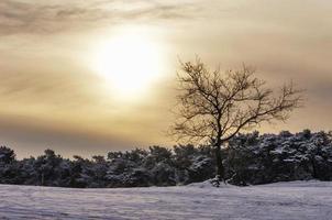 träd i snölandskap vid soluppgångstid med molnig himmel