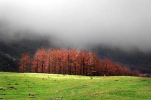röda lärkar på hösten foto