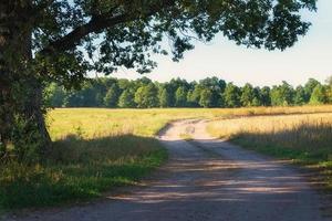 landsbygdens väg i solig dag foto
