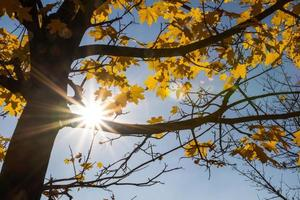sol och trä foto