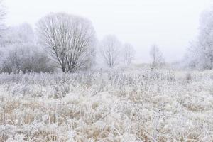 träd täckta med rimfrost i dimma foto