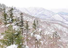 fantastiskt vinterlandskap snö kulle i korea
