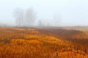höst trä. dimma bakgrund. foto