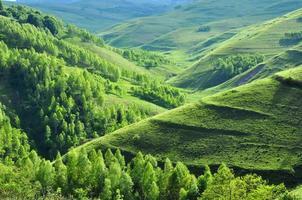 livlig grön äng foto