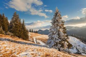 vackert vinterlandskap med snötäckta träd