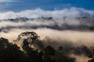 hala-bala narathiwas morgonljuset landskapsvy (regnskogar