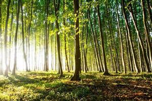 natur. vacker solnedgång i skogen