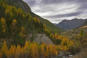 orange trä. foto