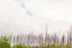 torkade träd i molnig himmel