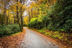 höstfärg längs en grusväg nära Blue Ridge Parkway foto