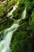 grön glans foto