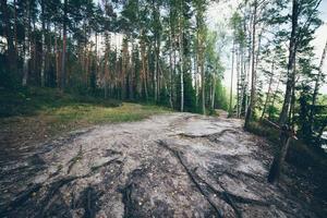 natursköna och vackra turism spår i skogen nära floden