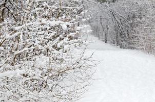 träd täckta av snö foto