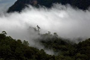 landskapssikt av regnskog i dimma på morgonen på berget